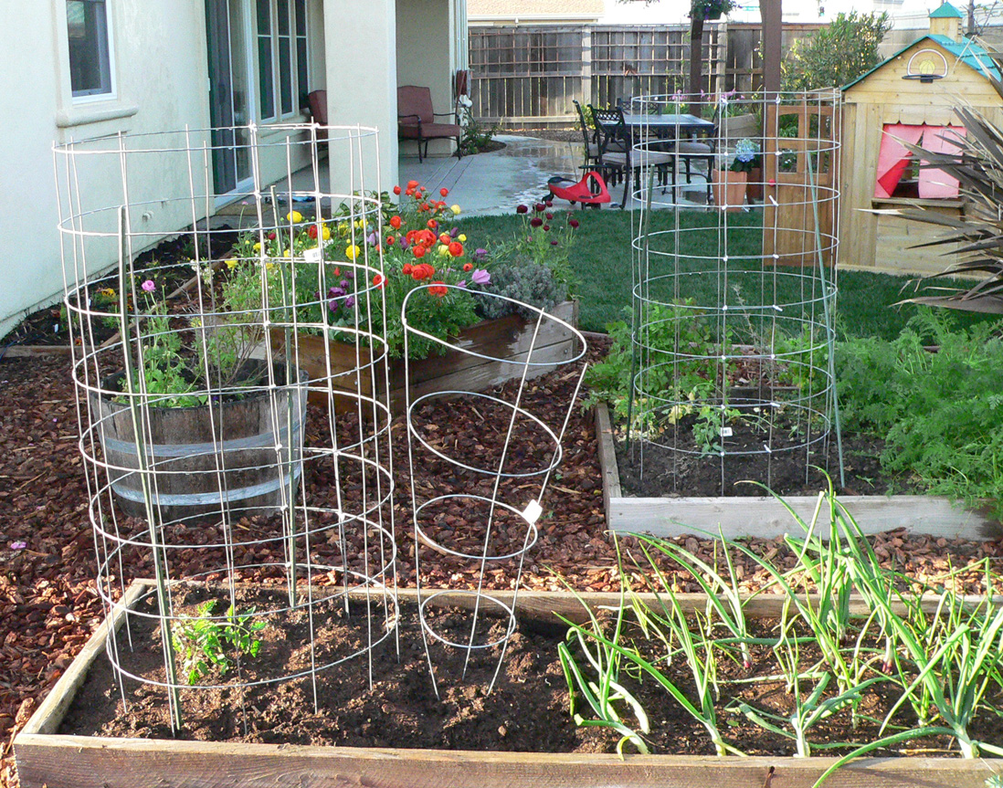 Tomato cages for the ages Input to the garden